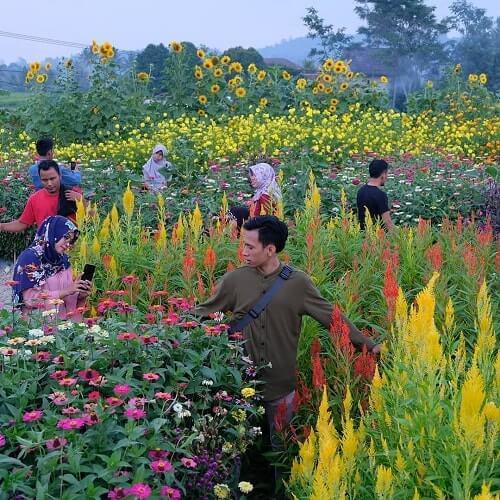 suasana liburan di taman bunga shinta serang