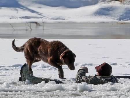 Верная собака, которая 30 минут не покидала хозяина и ждала, пока его спасут из-подо льда