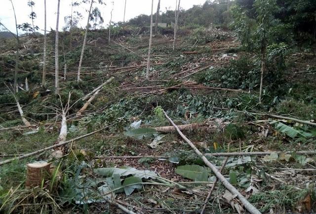 Bom Jardim: Polícia encontra 3 mil m² de área de preservação desmatada