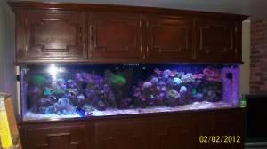 Giant Aquariums: 300 gallon reef aquarium setup   $1200 (dunwoody)