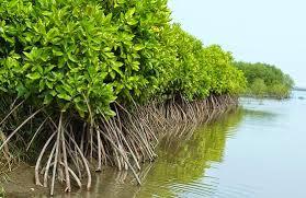 bagaimana hutan bakau dapat menjaga keseimbangan alam