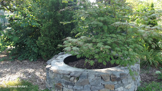 Japanese maple in a stone well, Marsh Botanical Garden - Yale University, New Haven, CT