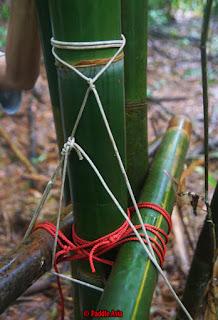 Bamboo lashing jungle survival shelter building