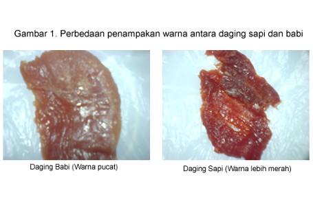 Penting! Ini 5 Perbedaan Daging Babi dan Daging Sapi
