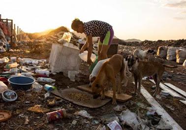 Mulher vai a lixão todo dia alimentar 40 animais abandonados