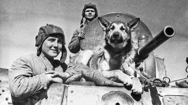 Los perros de la guerra, algo más que el título de una novela