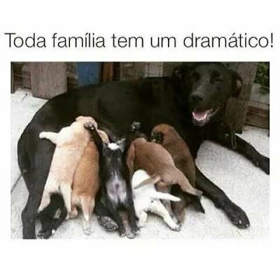 meme, humor, engraçado, melhor site de memes, memes 2019, memes brasil, memes br, eu na vida, zueira sem limites, humor negro, melhor site de humor, dramatico