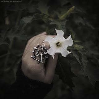 Datura Stramonium, Jimson Weed, Thorn Apple, Devil's Snare, Estramonio