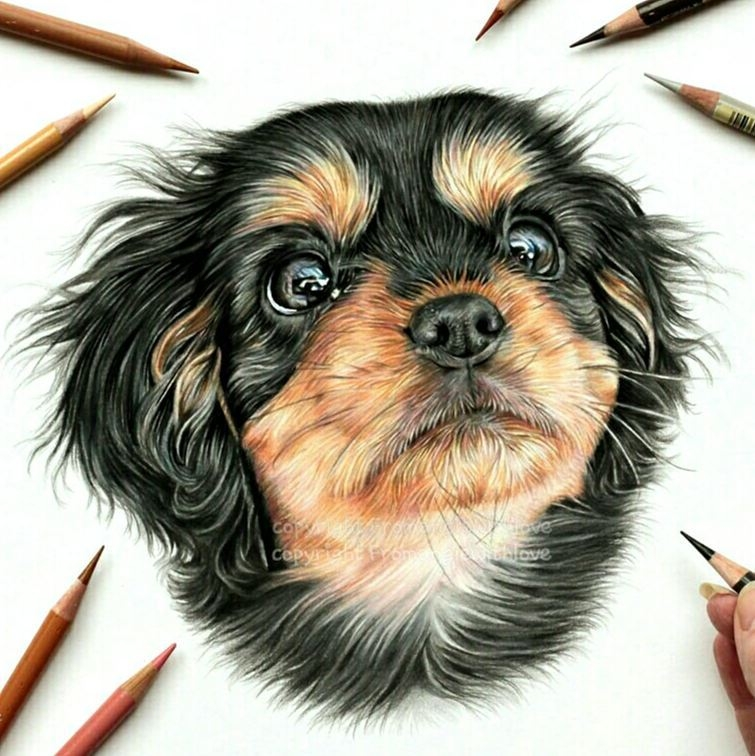 07-Lilly-the-Cavalier-puppy-Angie-A-Pet-and-Wildlife-Pencil-Drawing-Artist-www-designstack-co