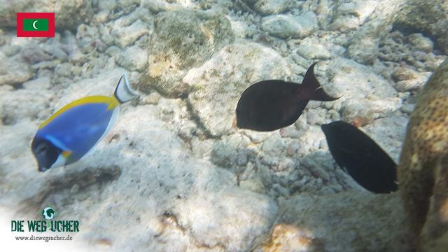 Die Wegsucher Arkadij und Katja schnorcheln auf den Malediven