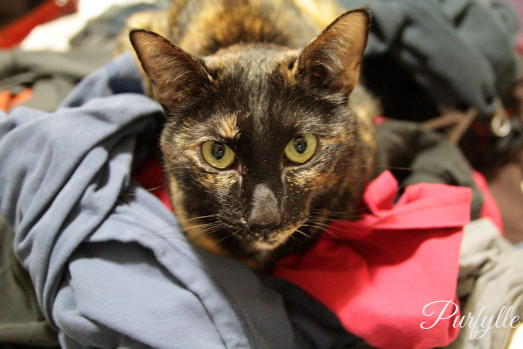 Ada cat on a pile of laundry