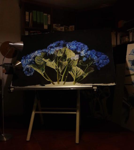 Hydrangea botanical painting