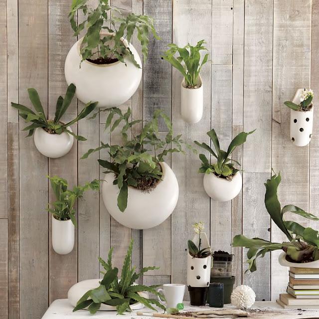 Wall Planters Dari Bahan Keramik dengan dinding kayu