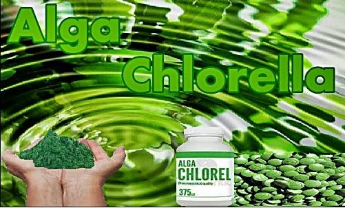 Mengenal Lebih Jauh Manfaat Alga Chlorella