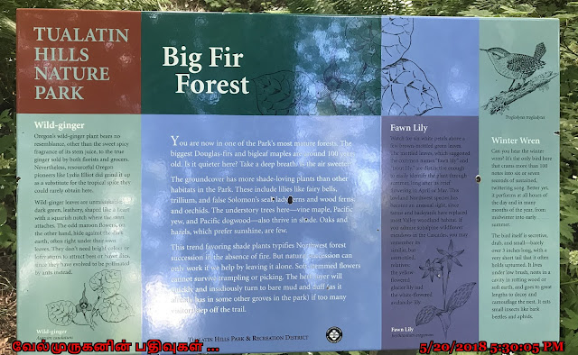 Big Fir Forest Beaverton