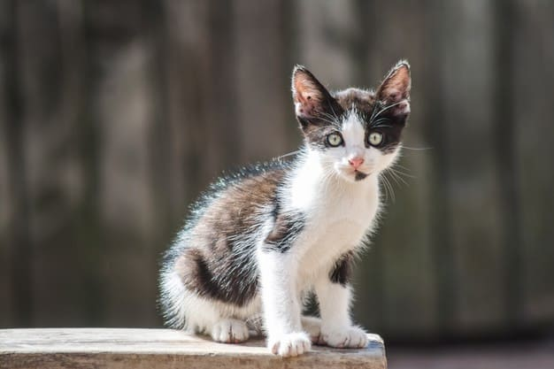 What are common cat diseases ?