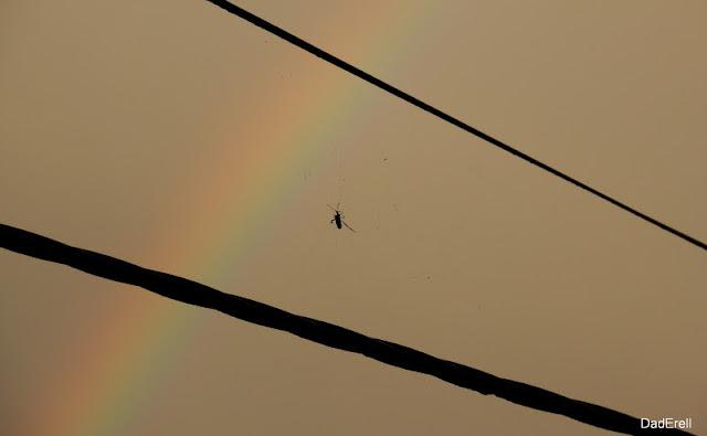 Coléoptère prisonnnier dans une toile d'araigéne sous un arc-en-ciel