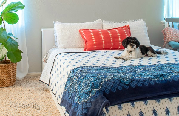 platform bed with puppy posing
