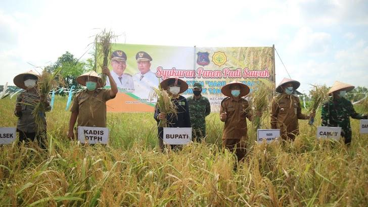 Bupati Anwar Sadar Hadiri Syukuran Panen Padi Di Desa Pembengis