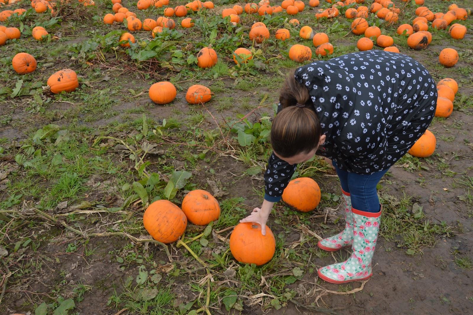 woman picking a pumpkin