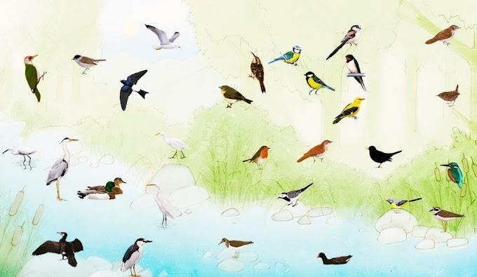 যেকোনো পাখির ছবিতে ক্লিক করে পাখির ডাক শুনুন, অসাধারণ লাগবে সকলের