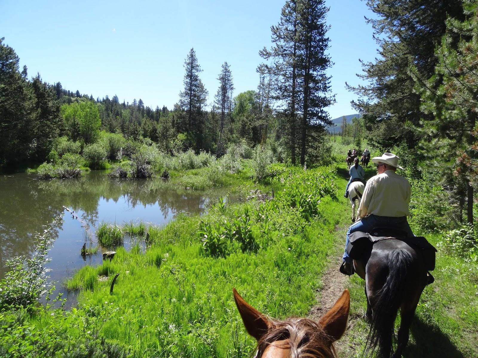 Dream Packer Trail Adventures: Pine Valley, Shingle Creek ...