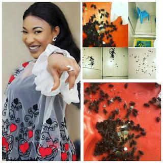 Tonto dikeh finds 1000 flies in son room