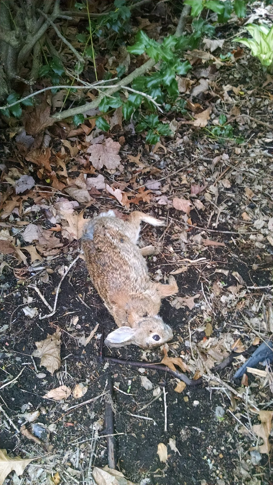 Frazzled At Forty: Today I Buried a Rabbit  Happy Spring     :(