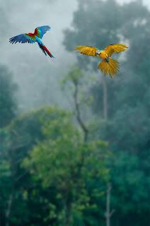 Beautiful Bird Nature Background Free Stock