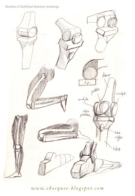 drawing studies of leg and hip anatomy