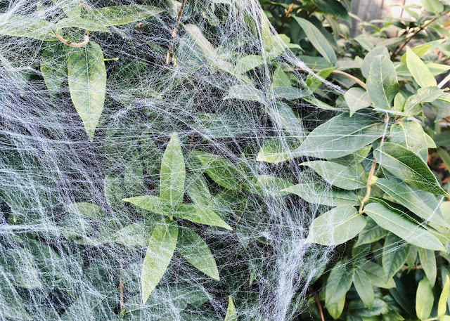 A fake spider's web spread across a bush makes a simple but spooky decoration