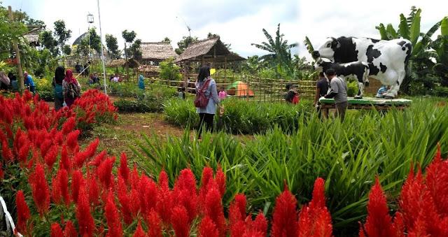 Agro wisata Banyuwangi menampilkan produk unggulan Banyuwangi.