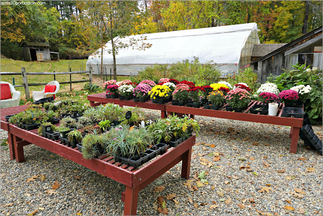 Vivero de Pickity Place en Mason, New Hampshire