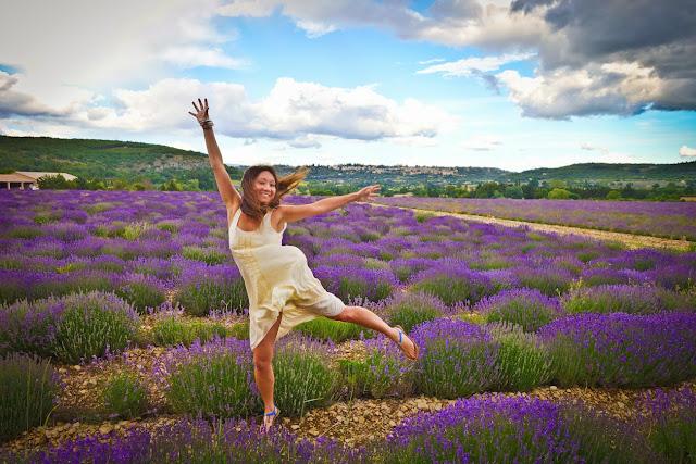 cánh đồng hoa oải hương đẹp nhất thế giới 27