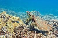 http://www.tropicallight.com/swim1/20oct19sm/20oct19sm.html