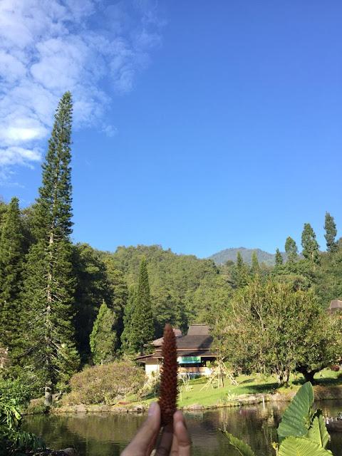 Training di Lembah Hijau, Puncak, Bogor