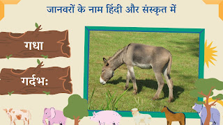 donkey name in sanskrit and hindi with images
