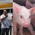 Protestan porque no le han pagado los cerdos