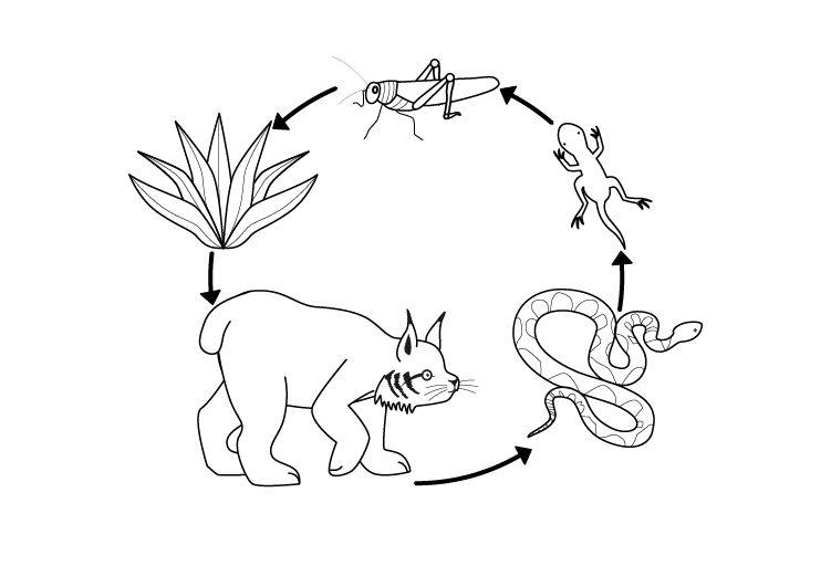 Mi Clase De Primaria Tema 4 Los Ecosistemas