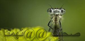 لاالقضاء على الحشرات نهائيا