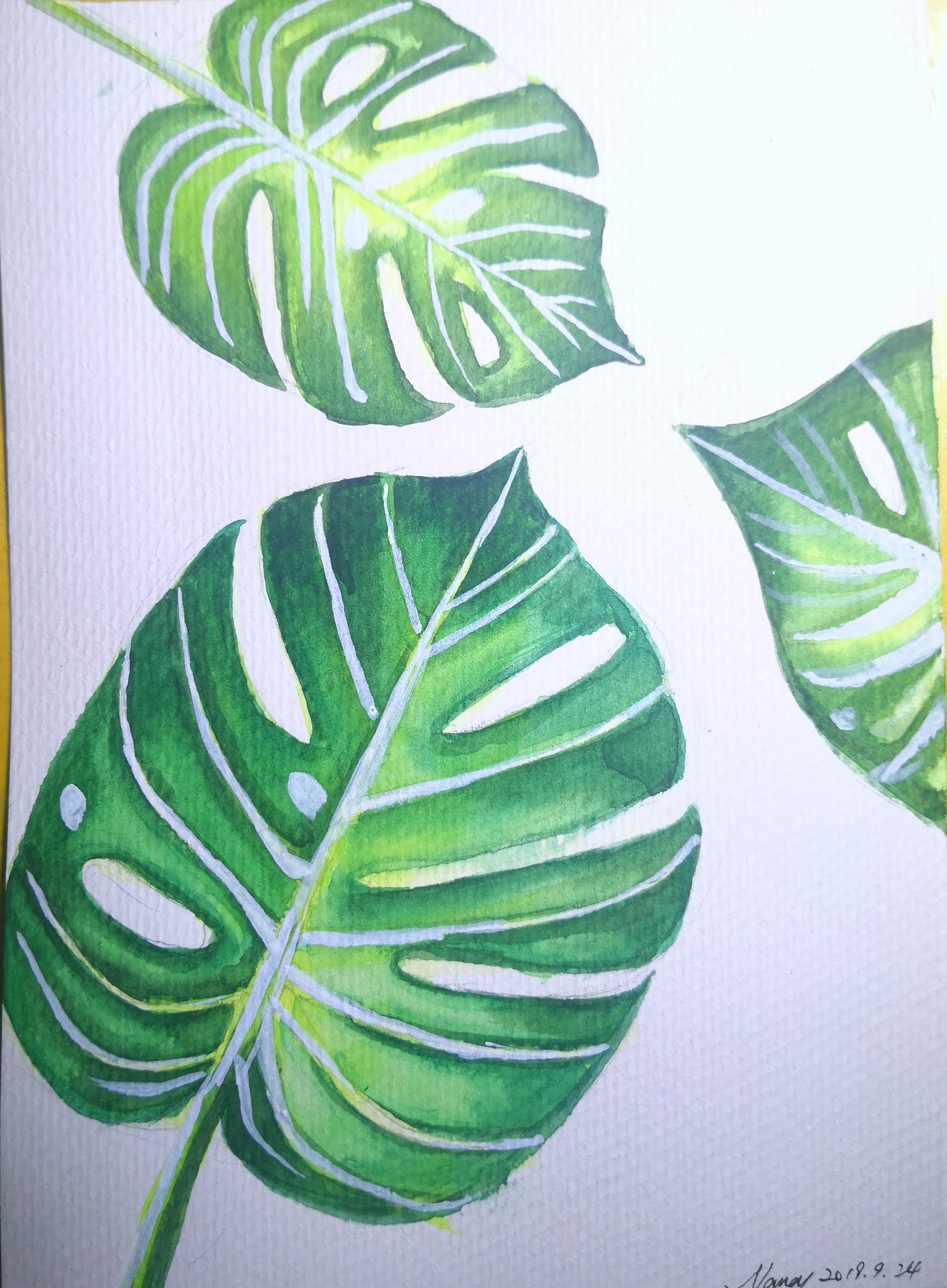 How to draw Philodendron Monstera Split Leaf step by step for beginner