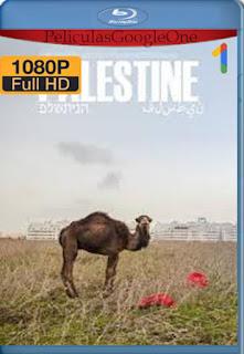Palestina: Una tierra en conflicto (2017) AMZN [1080p Web-DL] [Latino-Arabe] [LaPipiotaHD]