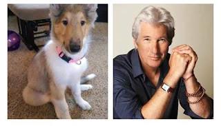 Perros que se parecen a sus dueños famosos - Richard Gere