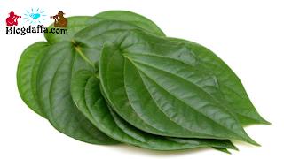 Tanaman Herbal Antiseptik Daun Sirih