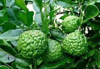 Health Benefits of Kaffir Lime