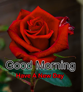 New Good Morning 4k Full HD Images Download For Daily%2B8