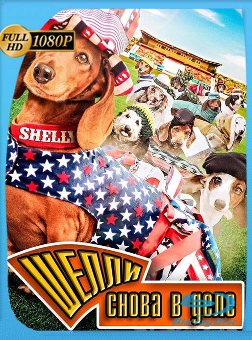 Wiener Dog Internationals (2017) WEB-DL 1080p Latino [GoogleDrive] [tomyly]