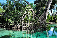 Mangrove à Playa Rincón