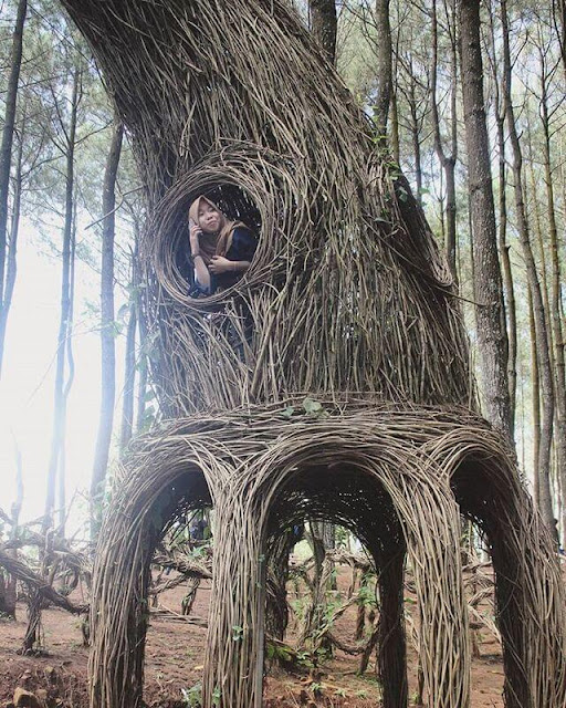 Harga Tiket Hutan Pinus Mangunan Jogja