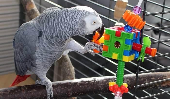 ألعاب الطيور و البغاوات  لتقوية ذكاء طيور الببغاء